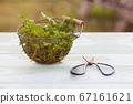Green wild herbs in the metal bowl 67161621