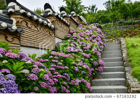 绣球花,绣球花公园,Tochodo,锡南郡,全南,韩国 67163292