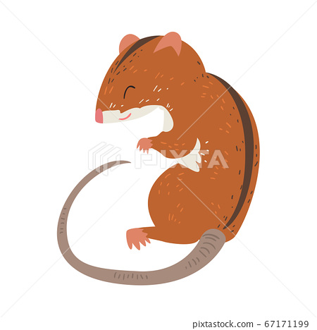 Field Mouse, Adorable Fluffy Red Rodent Animal with Black Stripe on Its Back Vector Illustration 67171199