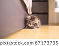 蹲下的小貓 67173735
