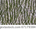 Bark texture with moss - wooden seamless pattern 67179384