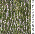 Bark texture with fluffy green moss - seamless pattern 67179388