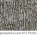 Bark of oak - diffuse seamless pattern for 3d 67179391