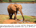 A red elephant drinks water from a water hole 67179457