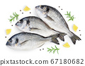 Fish dorado isolated on white background with clipping path and full depth of field. Top view. Flat lay 67180682