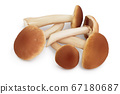 honey fungus mushrooms isolated on white background with clipping path and full depth of field 67180687