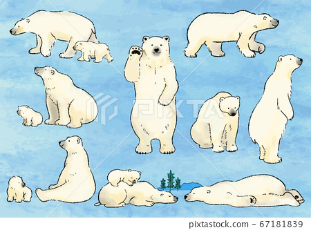 手繪水彩北極熊插圖集01 67181839