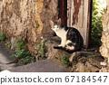Cat at the old door 67184547
