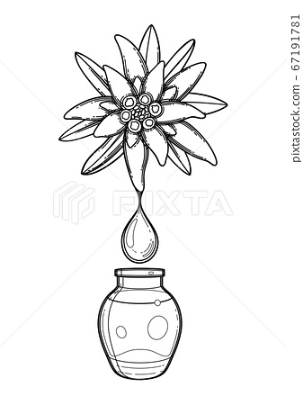 Graphic oil drop dripping from the edelweiss plant inside the glass bottle 67191781