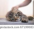 貓被撫摸 67199083
