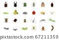 可爱的昆虫插图集 67211359