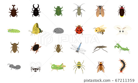 Cute insect illustration set 67211359