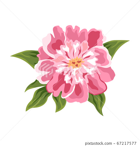 peony flower isolated on white, vector 67217577