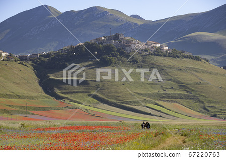 Castelluccio di Norcia, Italy - July 2020: the town and colorfull lentil fields are the perfect place for outdoor tourism 67220763