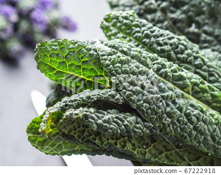 Bunch of organic black Tuscan kale 67222918