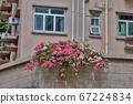 a Beautiful Decorative Colorful flower on Brick 67224834