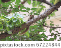 1 July 2020 a Squirrels are members of the family 67224844