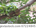 1 July 2020 a Squirrels are members of the family 67224845