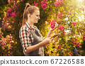 woman agronomist makes quality control breeding of new varieties of roses 67226588