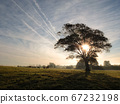 Rural sunrise scene with lonely tree 67232198