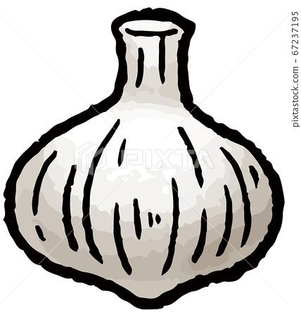 大蒜的手工繪製的矢量圖 67237195