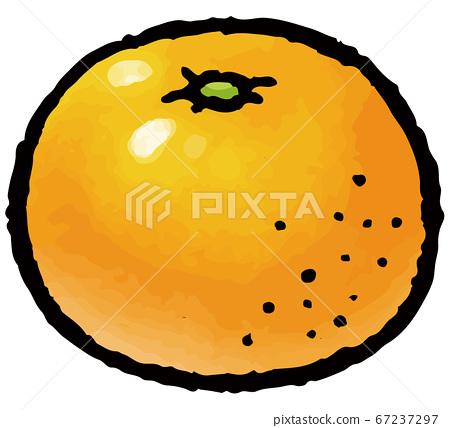 手工繪製的矢量圖的橘子 67237297