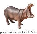 Isolated Hippopotamus on white background, 67237549
