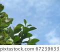 漫長的雨季之間的藍天和白雲 67239633