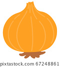 Illustration of a simple onion with skin without main line 67248861