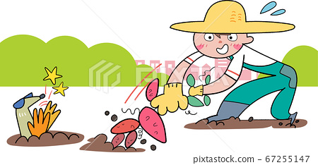 Illustration of a boy digging sweet potatoes in the field 67255147