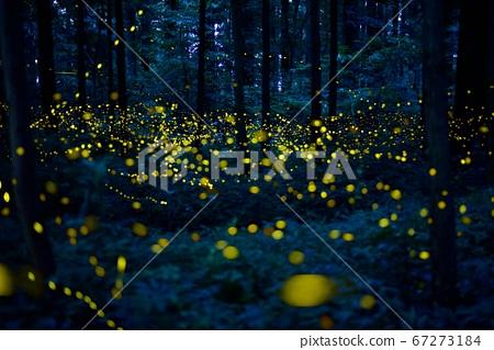 森林裡的仙女 67273184