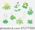 路邊植物 67277088