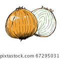 Illustration of onion 67295031