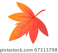 Maple illustration of autumn leaves 67313798