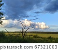 Dead tree on a background of dark blue and white clouds over the fields, smart 67321003