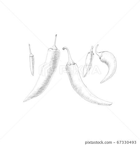 鉛筆素描胡椒 67330493