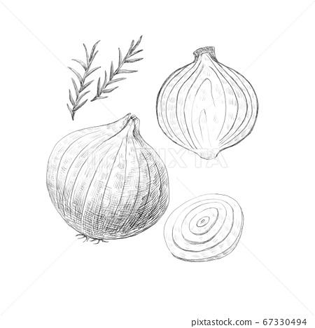 蔬菜 黑白 洋蔥 67330494