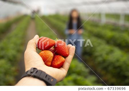 草莓果醬草莓屋 67339696