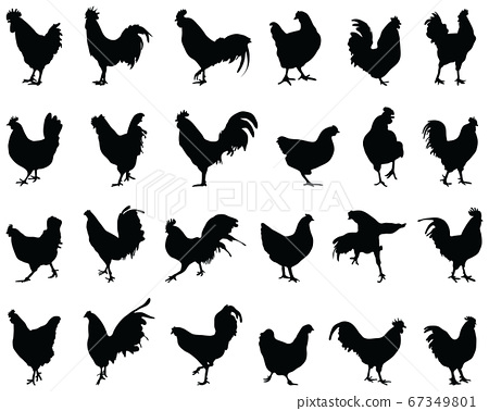 Black silhouettes of roosters and hens on a white background 67349801