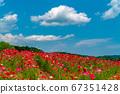 Blue sky and poppy flower field 67351428