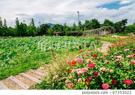 Walkway between flower field at Semiwon garden in Yangpyeong, Korea 67353022