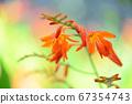 Orange flowers blooming in summer 67354743