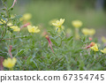 Yellow flowers blooming on a rural road 67354745