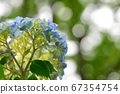 Looking up at the hydrangea 67354754