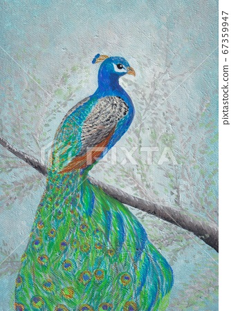 孔雀棲息在一棵樹上 67359947