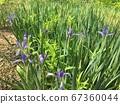 꽃 배경 67360044