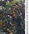 가을 풍경 67360231