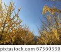 가을 풍경  67360339