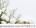 White flowers on a white background top view 67364112