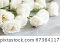 White flowers on a grey background close up 67364117